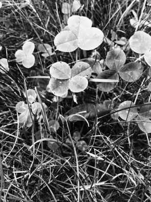 Unsaturated Luck (Black & White)